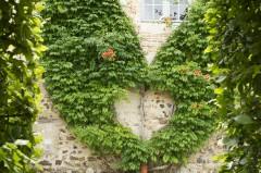 Cœur végétal en bigonne