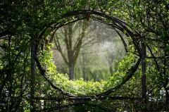 Fenêtre végétale en charme
