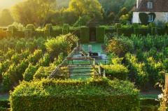 Jardins du prieuré d'Orsan à l'aube